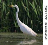 wildlife | Shutterstock . vector #32265352