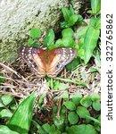 Monarch Butterfly Basking In...