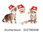 three young cats with christmas ... | Shutterstock . vector #322780448
