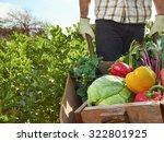 farmer harvesting organic... | Shutterstock . vector #322801925