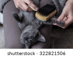 Sweet Cat Is Brushed