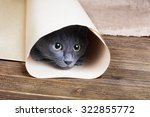 Stock photo cute blue kitten is sitting and playing in tube of paper 322855772