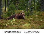 bear lying in the forest | Shutterstock . vector #322906922
