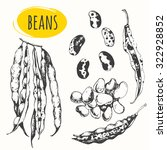 beans and legumes. set of hand... | Shutterstock .eps vector #322928852