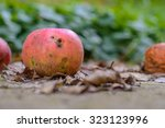 Rotting Apple Fallen On The...