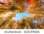 Autumn Beech Fall Forest In...