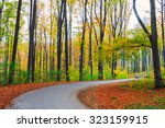 Road In Autumn Beech Landscape...