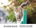 Cat Walks On The Fence