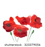 Watercolor Flowers Poppies