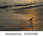 Bird standing on Beach - stock photo