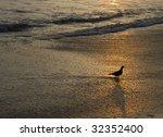 Bird standing on Beach - stock photo