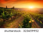 ripe wine grapes on vines in... | Shutterstock . vector #323659952