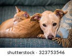 Stock photo close up cute cat and dog together lying in the bed 323753546