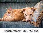 Stock photo close up cute cat and dog together lying in the bed 323753555