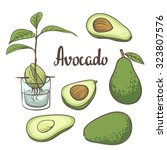 avocado  half of avocado ... | Shutterstock .eps vector #323807576
