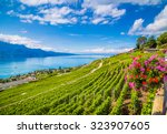 beautiful scenery with rows of... | Shutterstock . vector #323907605