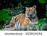 tiger | Shutterstock . vector #323914196