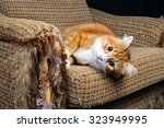 as our beloved pets are... | Shutterstock . vector #323949995