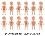 kid body  medical illustration  ... | Shutterstock .eps vector #324108785
