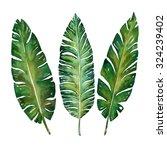banana leaves watercolor ... | Shutterstock . vector #324239402