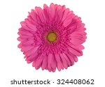 Pink Gerber Flower Isolated On...