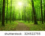 sun beam in a green forest | Shutterstock . vector #324522755