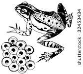frog | Shutterstock .eps vector #32453434