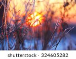abstract silhouettes of plants... | Shutterstock . vector #324605282