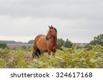 New Forest Pony Brown