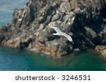 a gull flying over the... | Shutterstock . vector #3246531