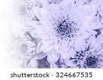 beautiful chrysanthemum flowers ... | Shutterstock . vector #324667535