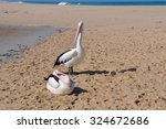 Two Pelicans By River Mouth Tw...