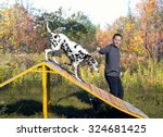 Stock photo dalmatian dog with man handler in nature on the training ground is jumping through a barrier in 324681425