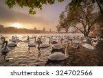 Morning Sunrise With Swans Nea...