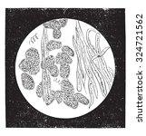 cocoa pulverized  vintage...   Shutterstock .eps vector #324721562