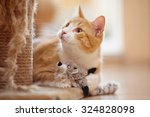 Stock photo portrait of a red domestic cat on a floor with a toy 324828098