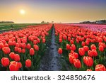 Beautiful Colored Tulip Fields...