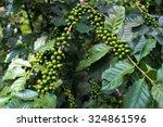 green coffee beans  green...   Shutterstock . vector #324861596