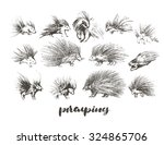 set of hand drawn porcupines | Shutterstock .eps vector #324865706