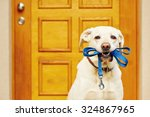Stock photo labrador retriever with leash is waiting for walk 324867965