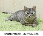 Cat On Green Carper Background...