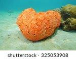 Sea Life Underwater  Red Borin...