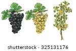 Illustration Of 2 Grapes  Bunc...