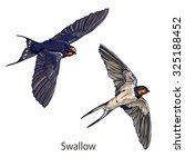 Swallow Vector  Vector...