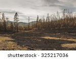charred trees after a forest... | Shutterstock . vector #325217036