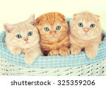 Stock photo three little kittens in the basket 325359206