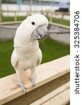 cockatoo perching on a fence - stock photo