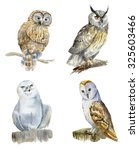 Collection Of Owls. Watercolor...