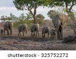 a herd of african elephants... | Shutterstock . vector #325752272