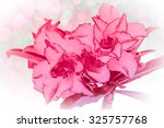 impala lily or desert rose or... | Shutterstock . vector #325757768